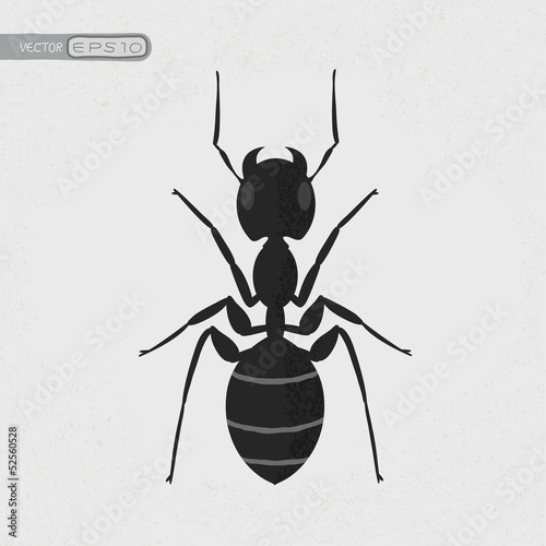 Black ant , eps10 vector format