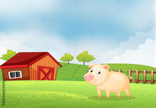 A pig in the farm with a wooden house at the back