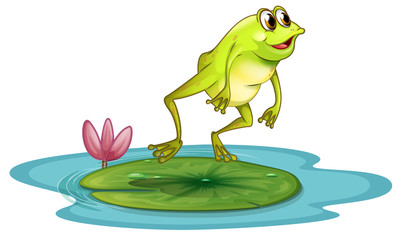 A frog at the pond