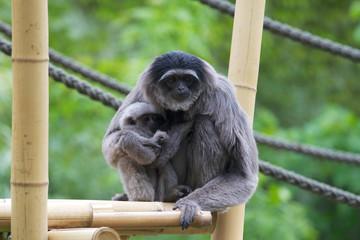 Drill Affenmutter mit Baby