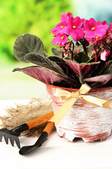 Bright saintpaulia and garden tools on natural background