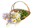 basket with wild flowers on white background
