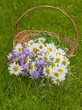 basket with wild flowers - grass background