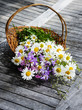 basket with wild flowers - daisies and blue bells