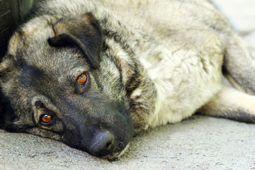 Sad stray dog