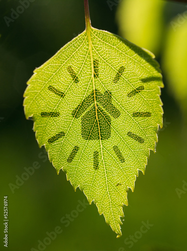 Green house sign with leaf