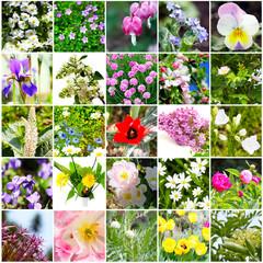 Blütenmosaik, Blütenvielfalt