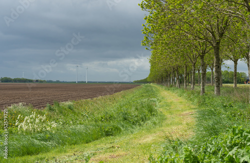 Row of trees along a mowed field in spring