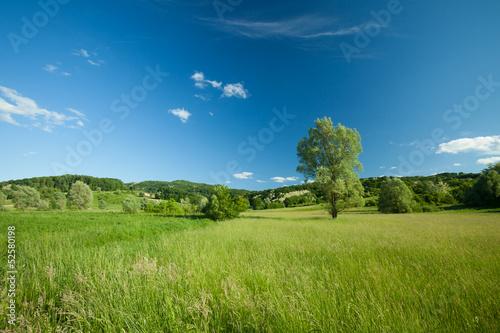 Fototapeten,ackerbau,hintergrund,belle,schönheit