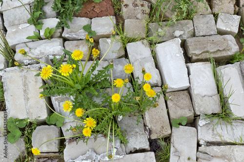 Leinwanddruck Bild Life and flowers stronger than stone
