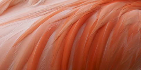 Close up pink flamingo