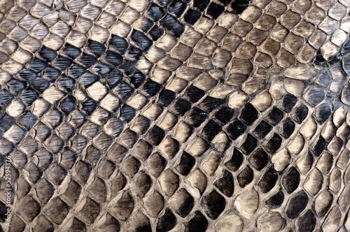 Texture de peau de python.