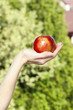 Red ripe single apple in beautiful hand on green garden backgrou