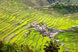 canvas print picture - Batad Ricefields