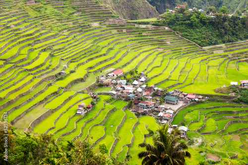 canvas print picture Batad Ricefields