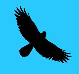 Eagle silhouette.