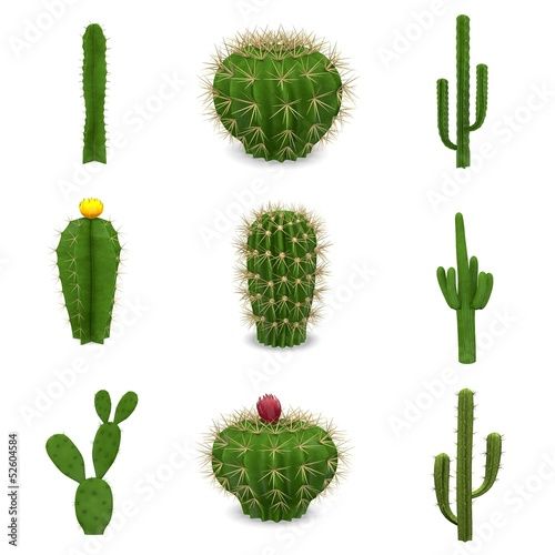 3d renders of cactuses set
