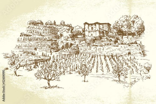 hand drawn vineyard