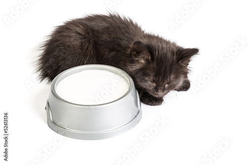 Black kitten drinks milk, on a white background