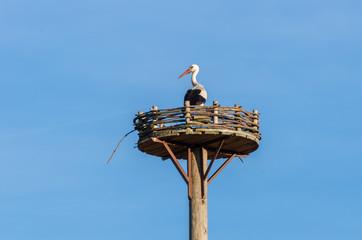 Stork Habitation