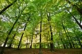 woods - 52615570