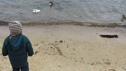 Little boy on the beach feeding the ducks
