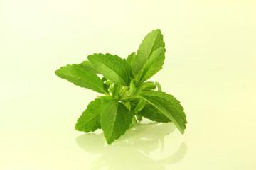 stevia closeup