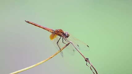 yellow dragonfly in the parks