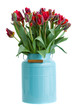 red tulip flowers in blue