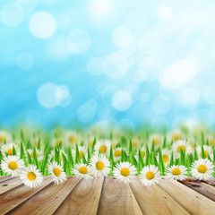 Daisies field  and wooden road on the sky background