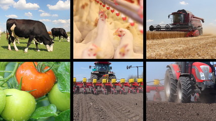 Agriculture, Food Production
