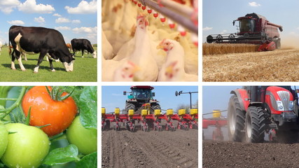 Agriculture - Food Industry Multiscreen