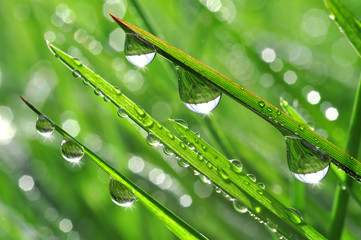 Dew drops close up