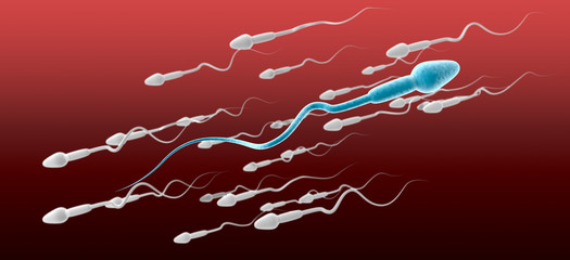 Sperm Cell Male Against The Flow