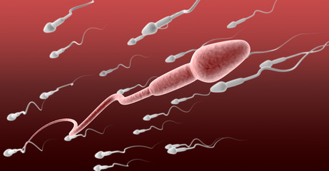 Sperm Cell Female Against The Flow