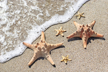 sea-stars lying on wet sand beach in sea wave