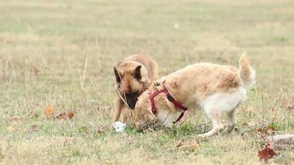 Due cani giocano nel parco