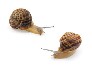 two snails isolated