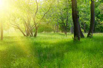 Sunny spring forest