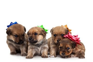 Four puppies