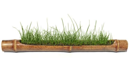 grass, bamboo