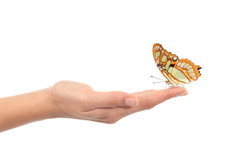Beautiful butterfly on a woman hand