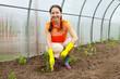 gardener planting tomato spouts