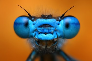 Extreme macro view of blue damselfly