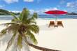cocotier sur plage de baie Lazare, Seychelles