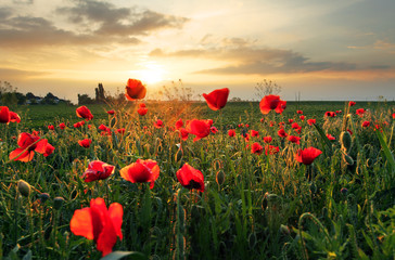 Poppies field flower on sunset © TTstudio