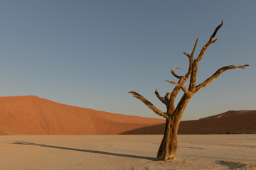 Deadvlei during the sunset