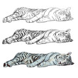 The vector of sleeping white tiger.