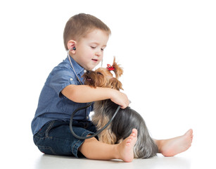boy kid examining dog isolated on white background