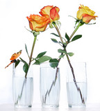 Three roses in glasses
